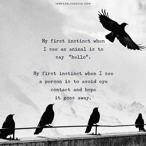 """My first instinct when I see an animal is to say """"""""hello"""". My first instinct when I see a person is to avoid eye contact and hope it goes away. Introvert Personality? 9 Tips Guaranteed To Improve Your Outlook"""