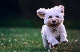 The Hidden Powers of 'Puppy Love': 3 Amazing Life Lessons Animals Can Teach Us